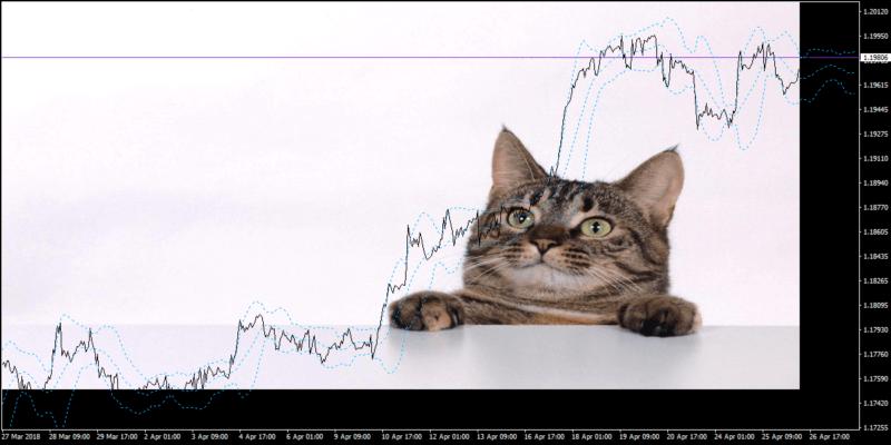 MT4チャート背景(猫)